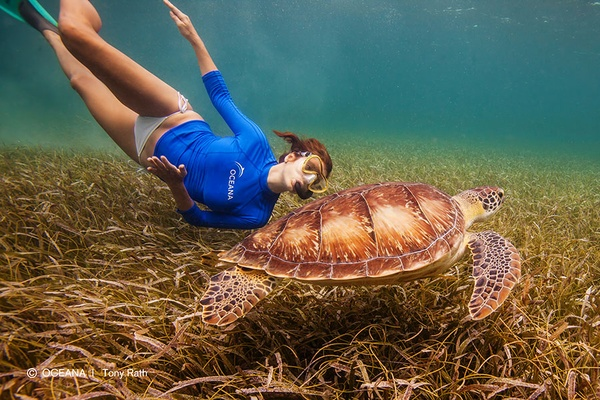 Swimming with turtle in Belize