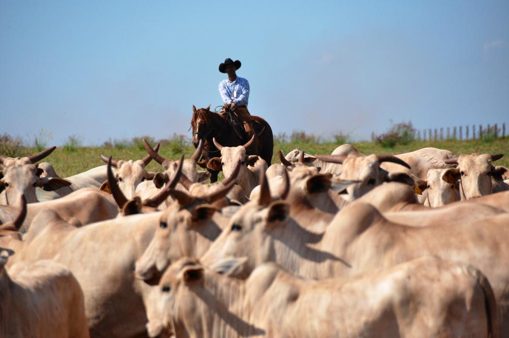 Horse and Cattle Brazil