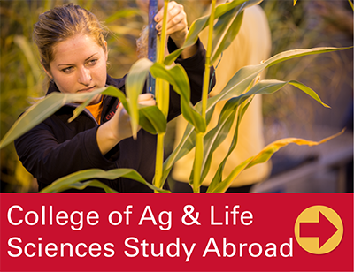 Agriculture and Life Sciences